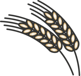 WheatIllustration